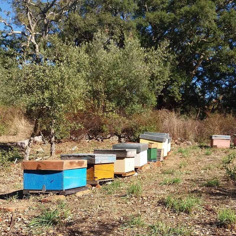 Roher Honig Wildblumen
